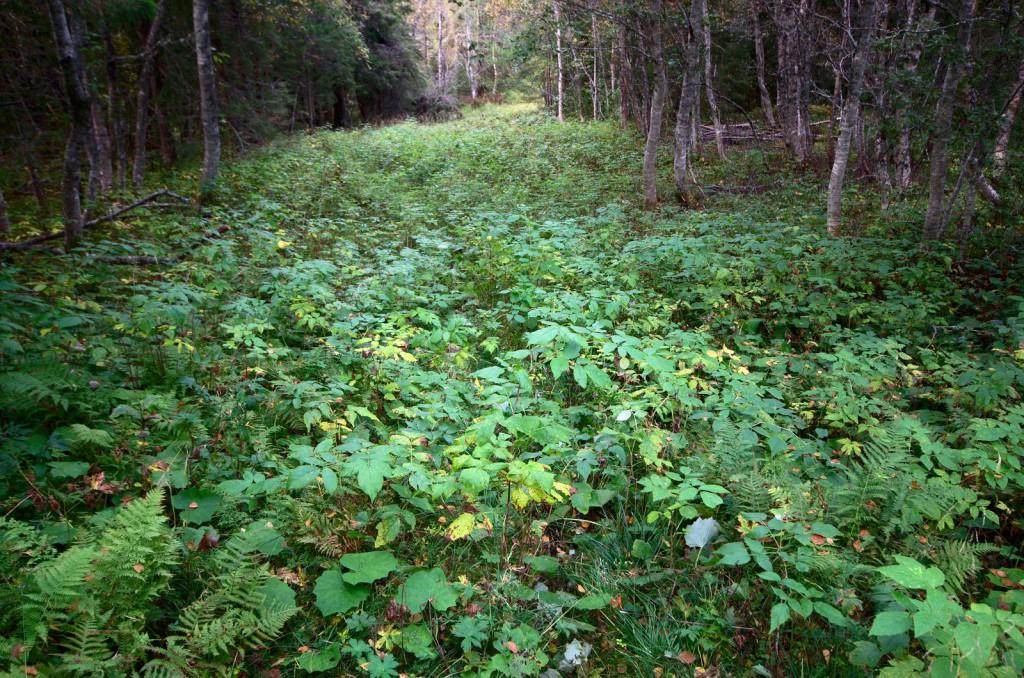 Stien forlates, stille tar skogen imot han som trår varsomt