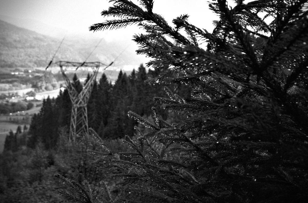 Monstermast i vestlandsnatur; Nordfjordeid, september 2014