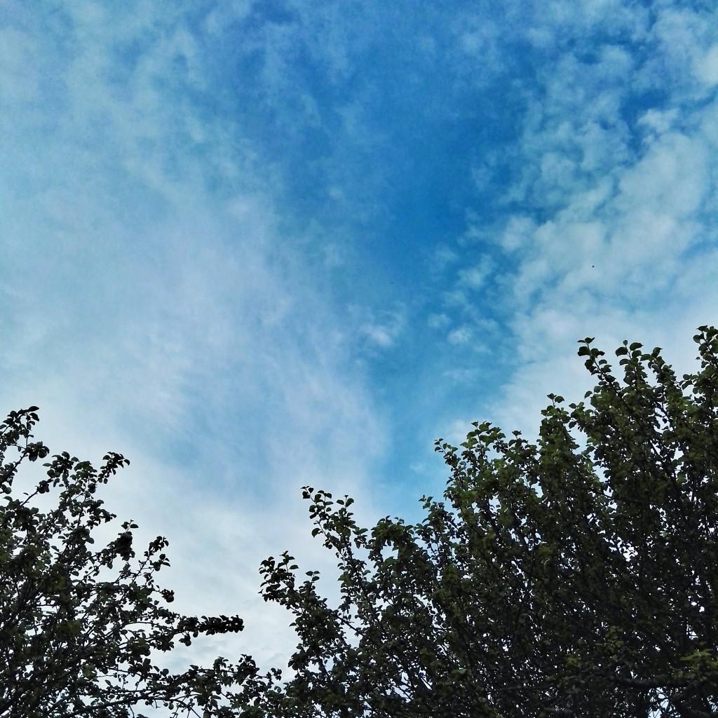 Høy himmel over epletrærne, Trondheim august 2015 (mobilbilde)
