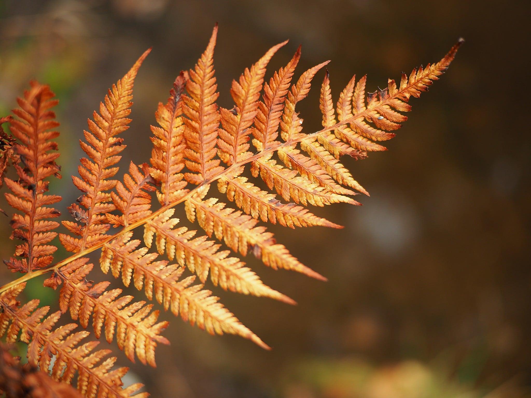 Høstfargene skifter, det gule og røde viker for det brune, vi gleder oss til vinteren nå