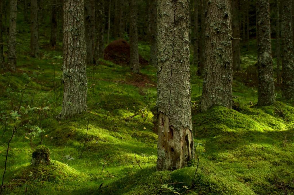 Skogsstemning