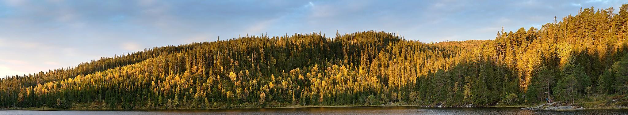 Panorama tatt idet solen titter over åsen og farger skogen gyllen ved Kobberdammen en torsdags morgen