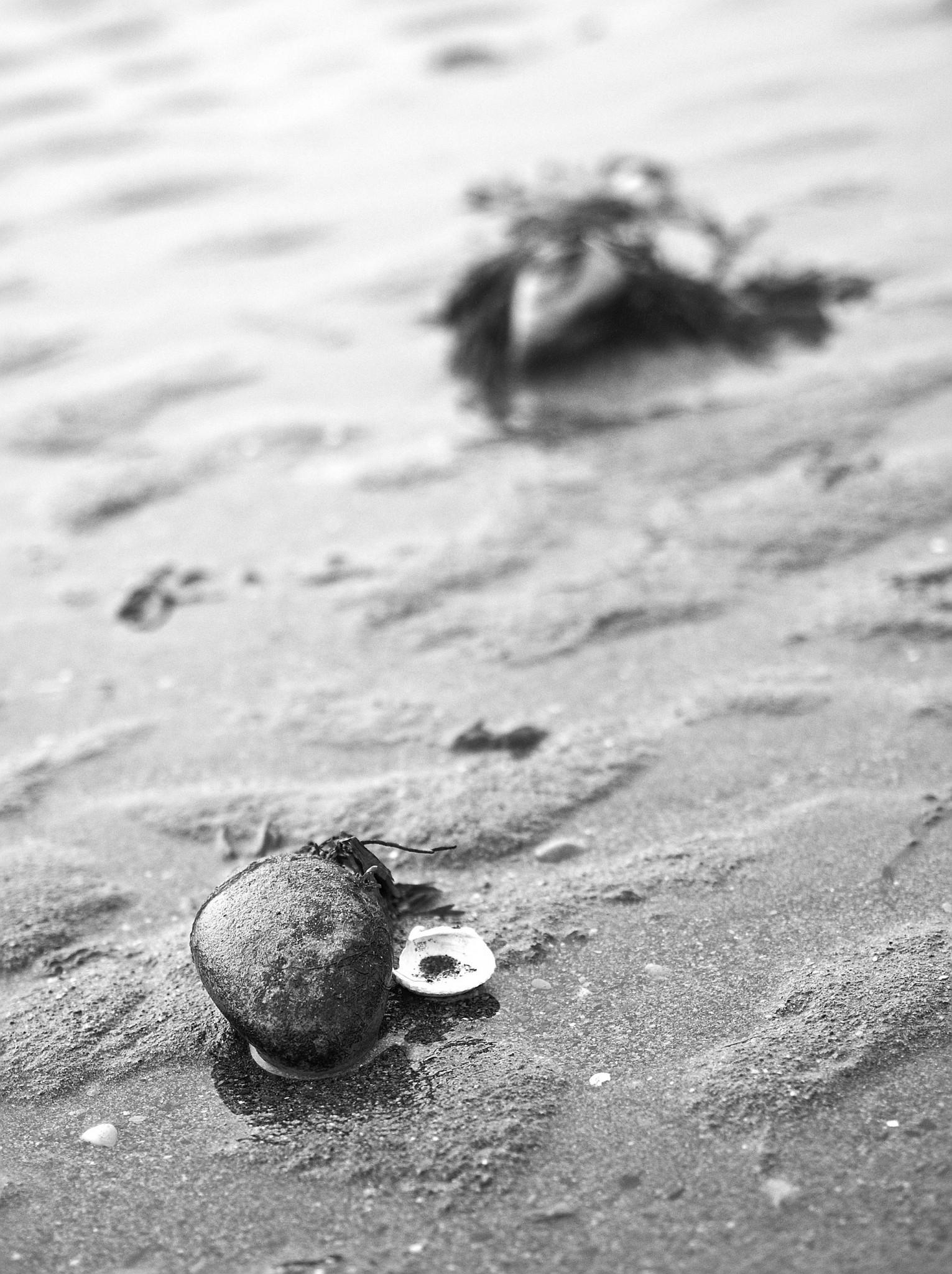 Portrett av skjell og stein ved fjære sjø, Øysand oktober 2015