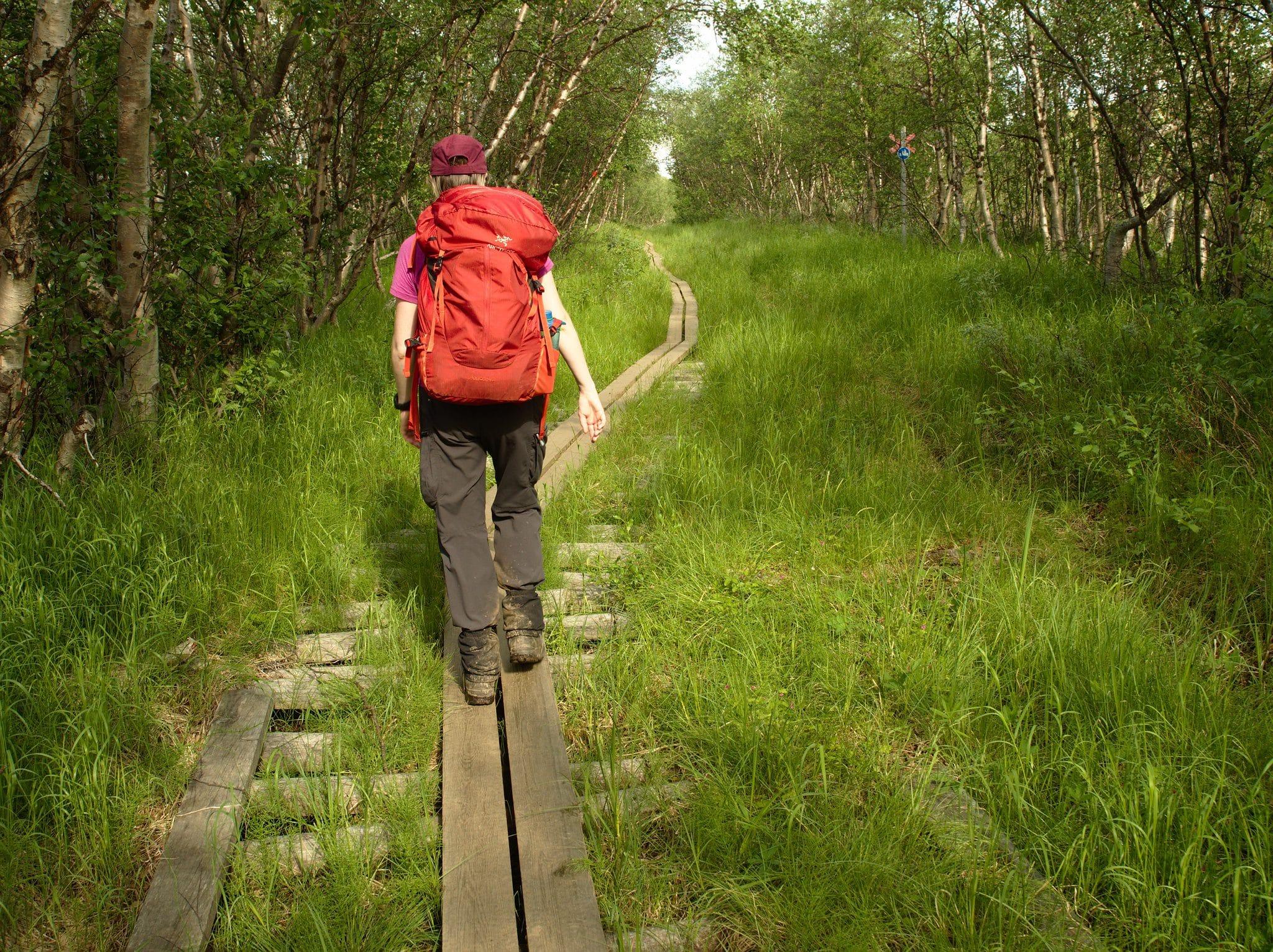 Siste rest av turen går i bjørkeskogen